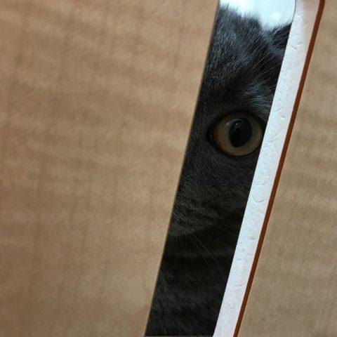 当店の猫ちゃんをご紹介!!