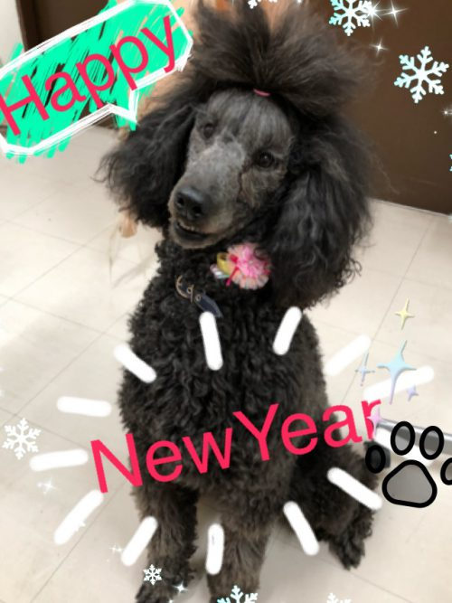 HAPPY NEW YEAR☆★☆★
