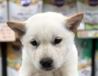 北海道犬さんがやってきました!!