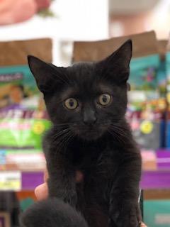 新しいネコちゃんのご紹介