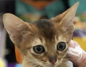 新しい猫ちゃんをご紹介します!